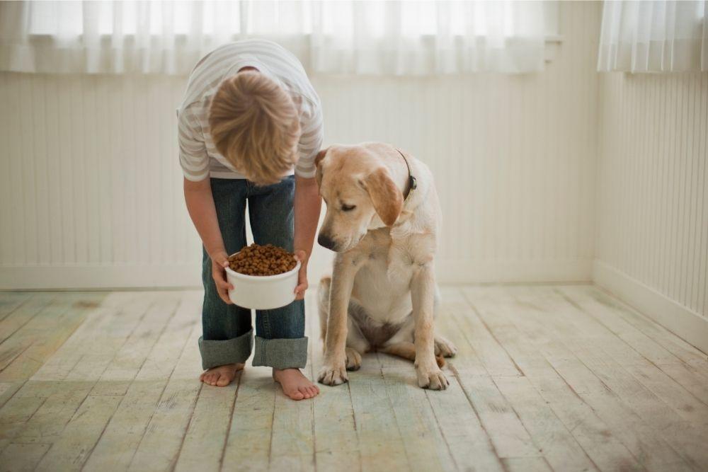 how-often-to-feed-dog