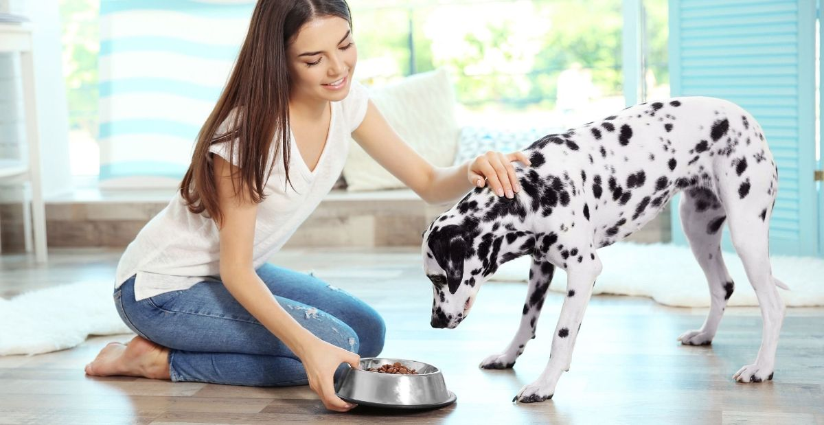 how-to-boost-dog-nutrition