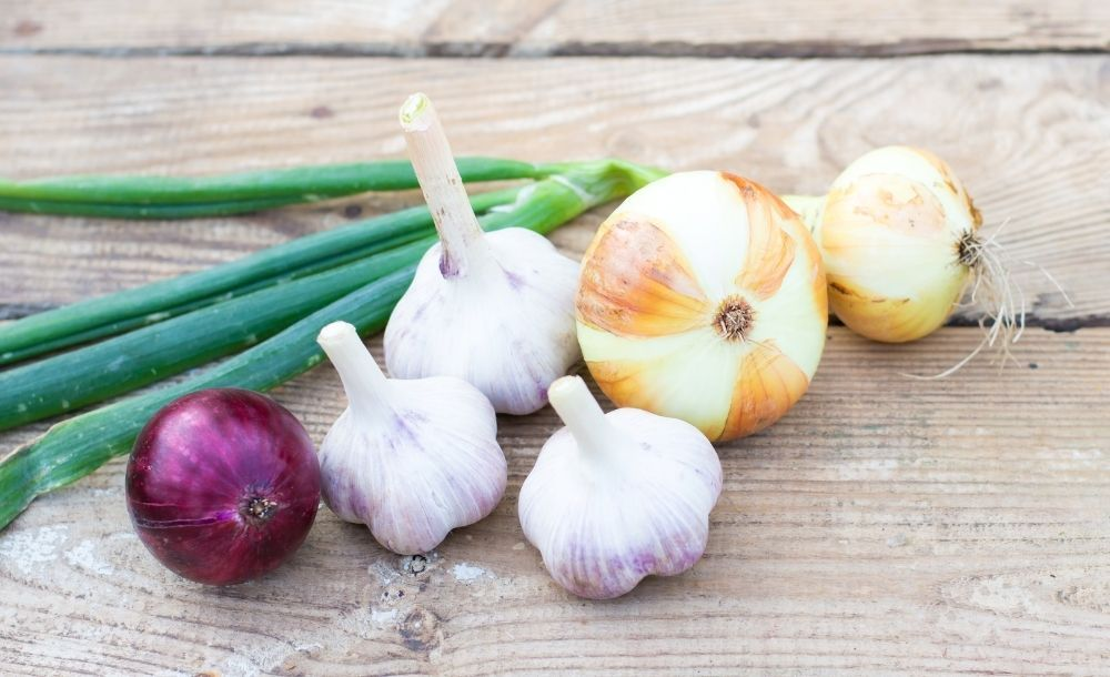 onion-garlic-toxic-to-dogs