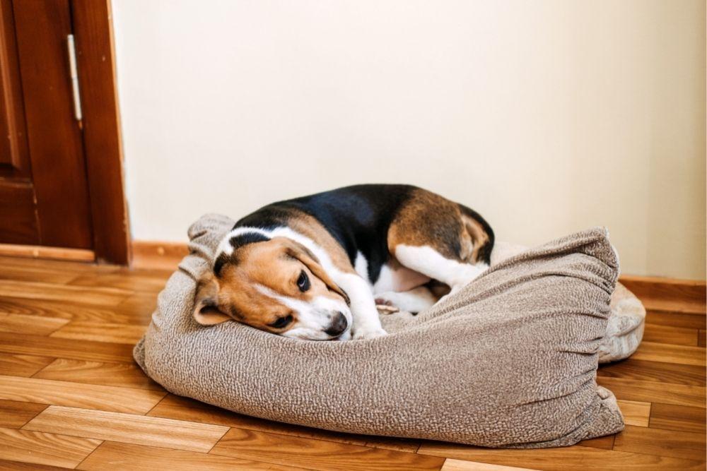 sick-dog-lying-on-dog-bed