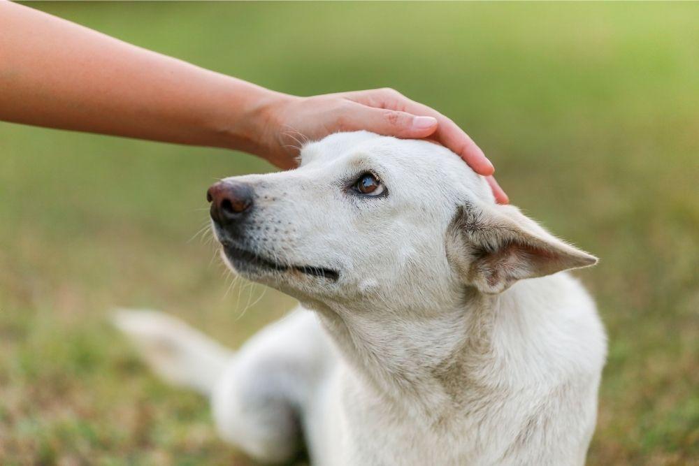 sick-dog-outdoors