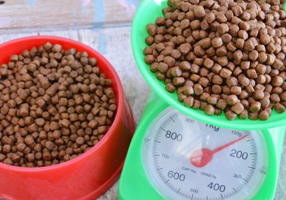 weighing-dog-food