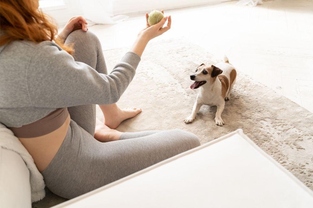 dog-fun-play-fetch