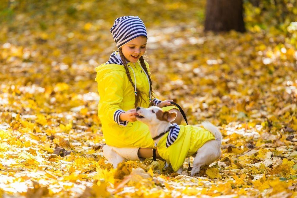 dog-outdoor-fun-photoshoot