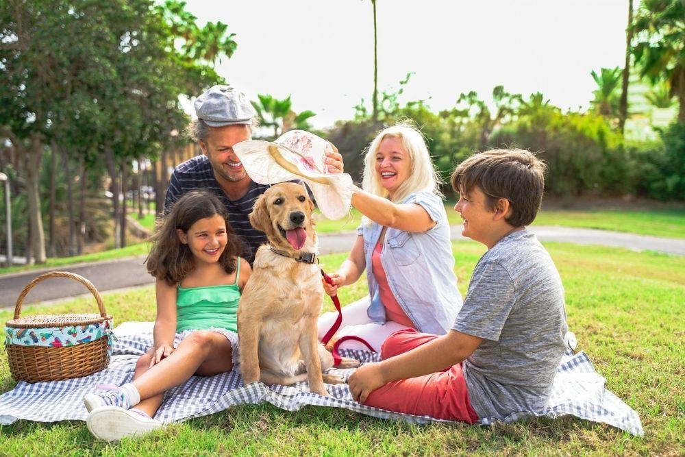 dog-outdoor-fun-picnic