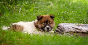 elo-puppy