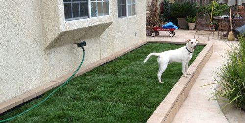 1. Simple Dog Run