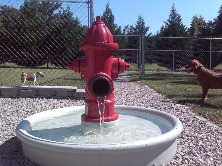 12. Dog Run with Water Fountain