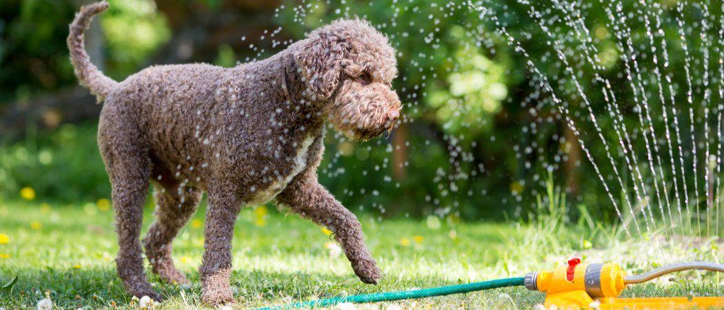 13. Dog Run with Sprinkler