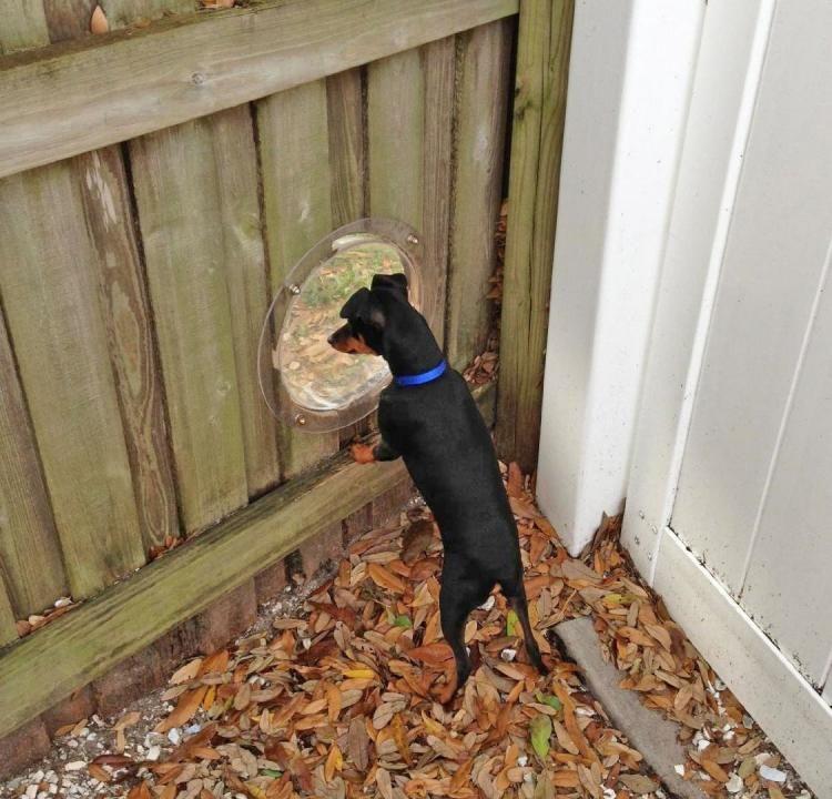 6. Bubble Window Dog Fence