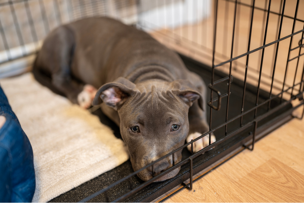comfortable-crate-for-dog