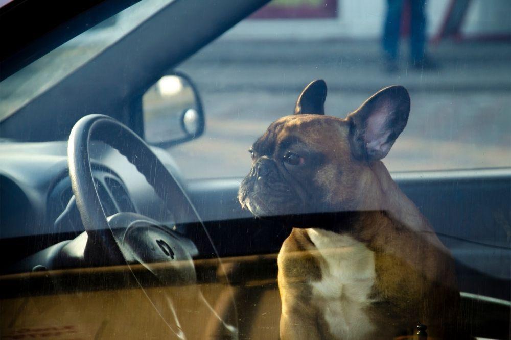 dog-alone-inside-car