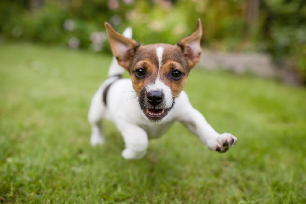 excited-dog-to-see-its-owner