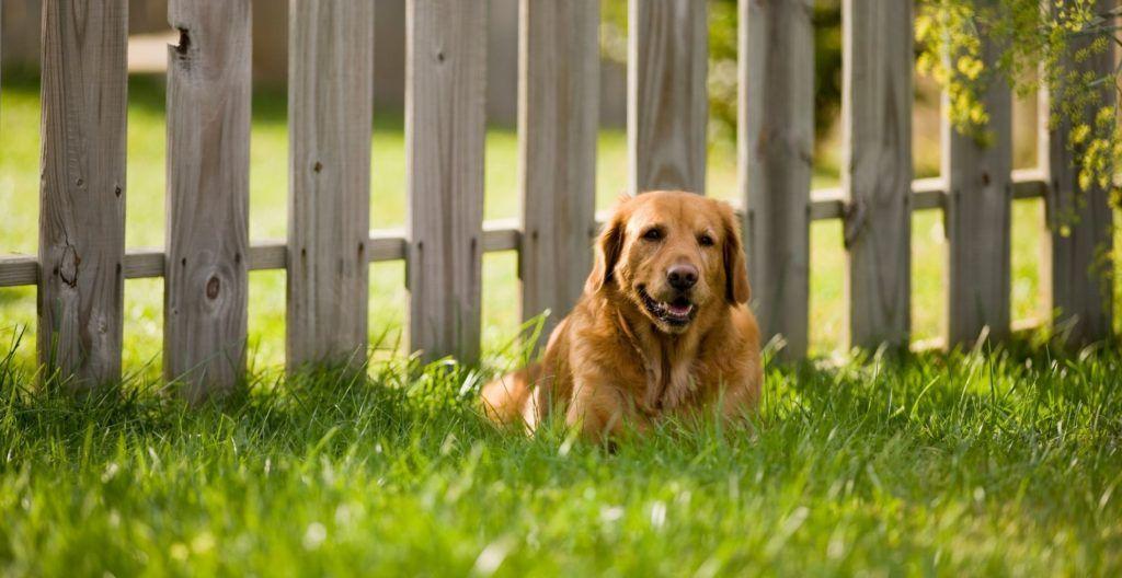 dog-fence-ideas