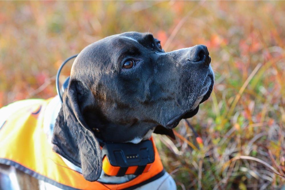 dog-gps-tracker