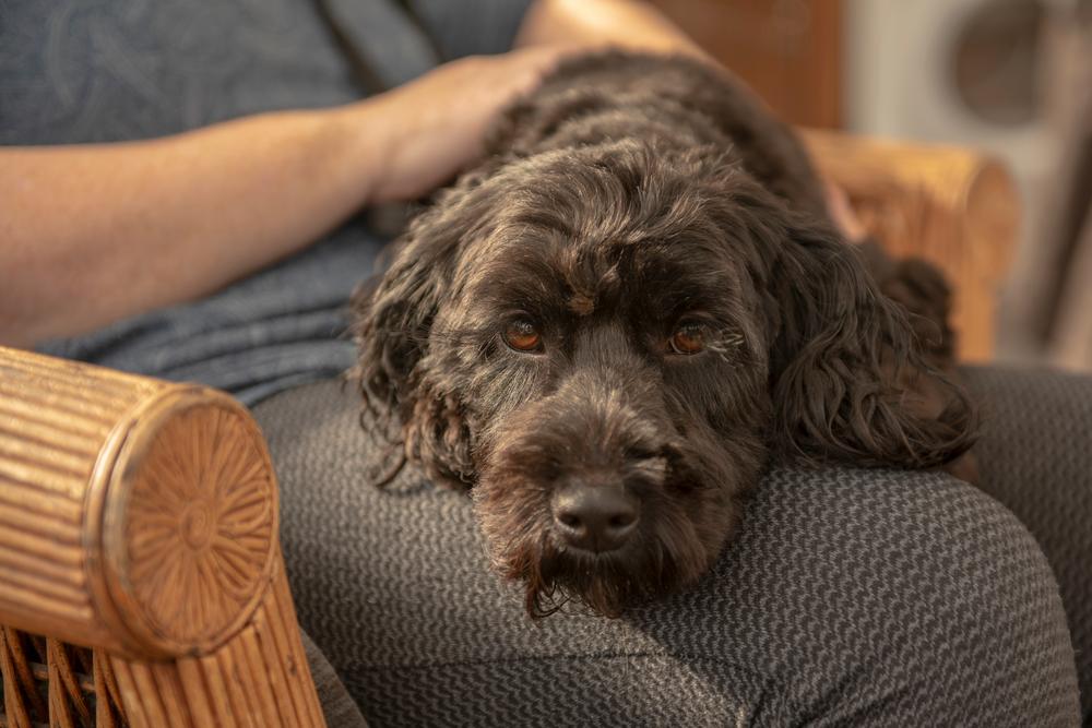 dog-laying-on-master-top