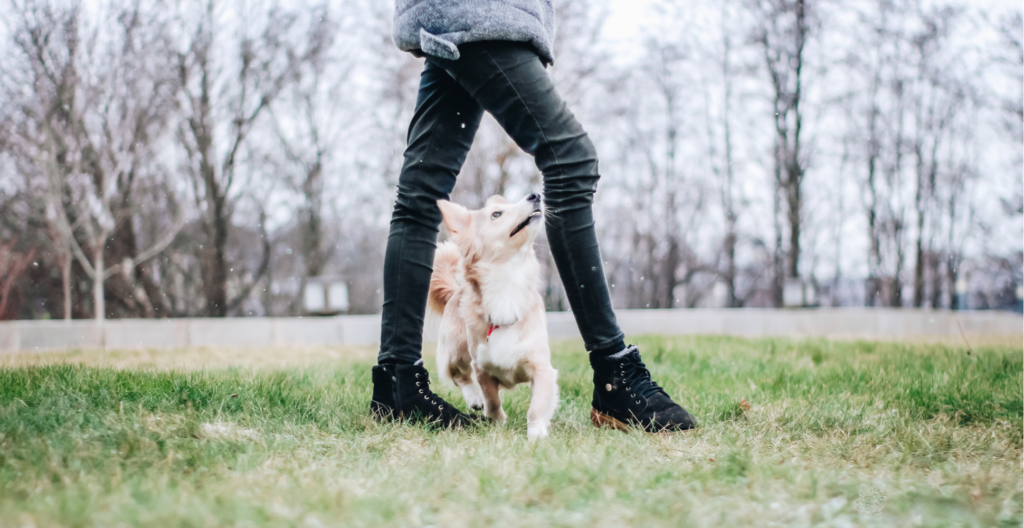 dog-licking-the-leg-header