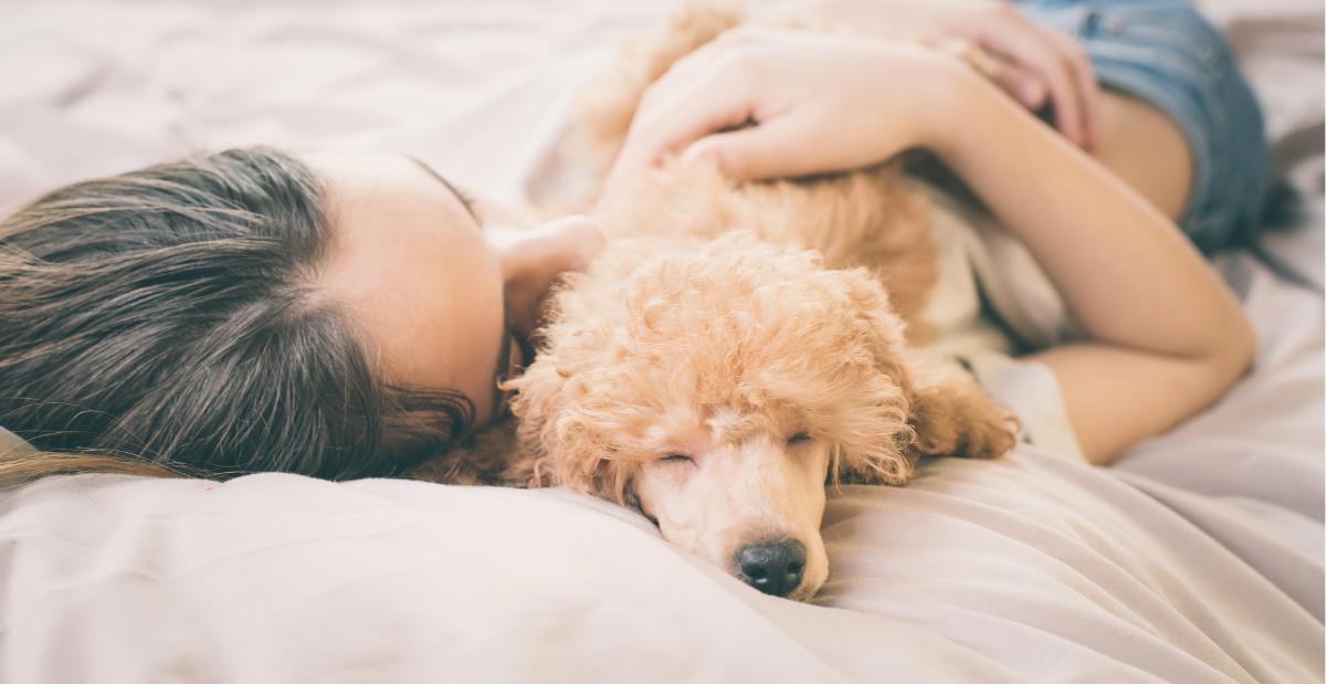 dog-lying-at-woman-header