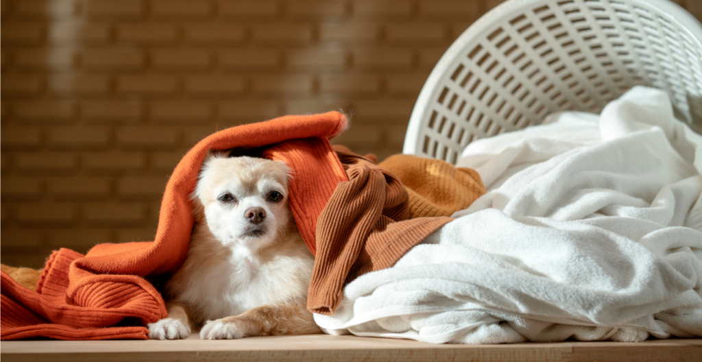 dog-lying-down-on-clothes-header