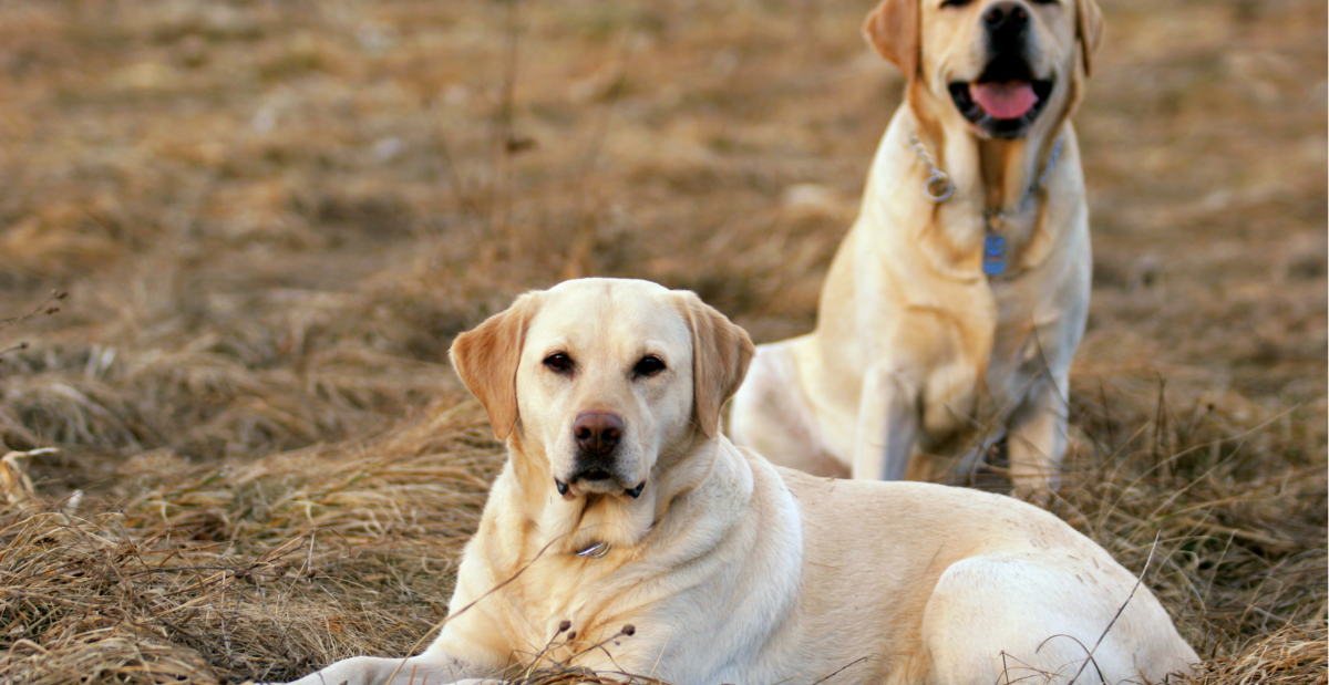 dog-mate-header