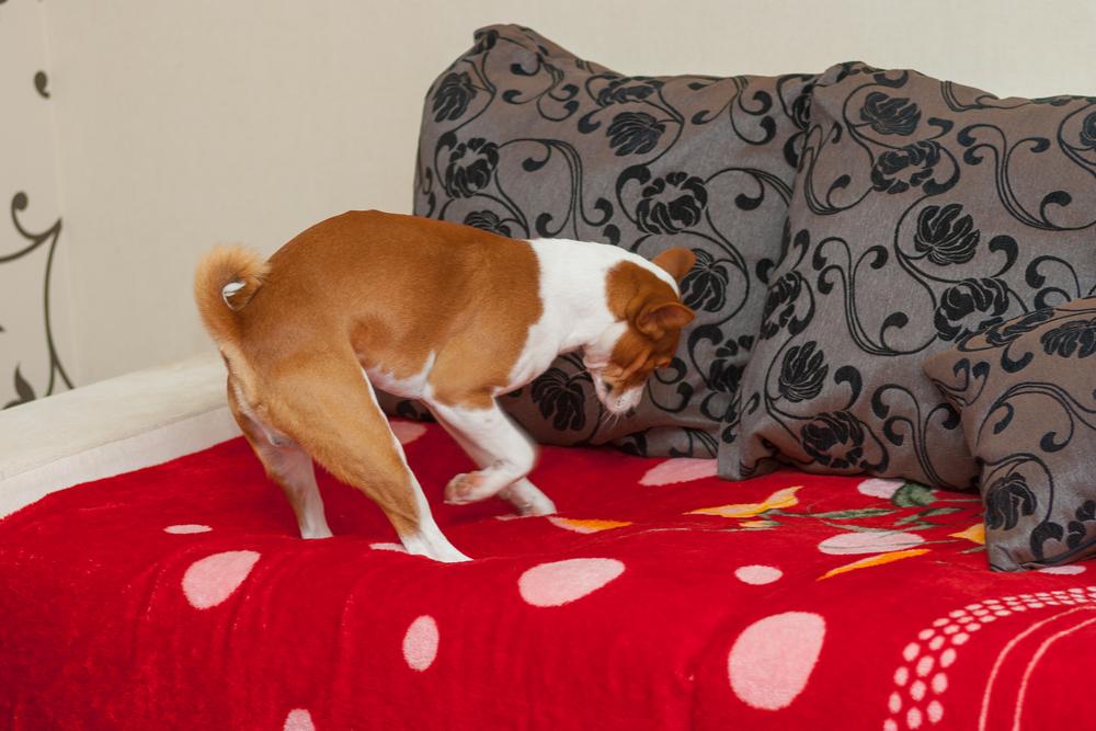 dog-natural-instinct