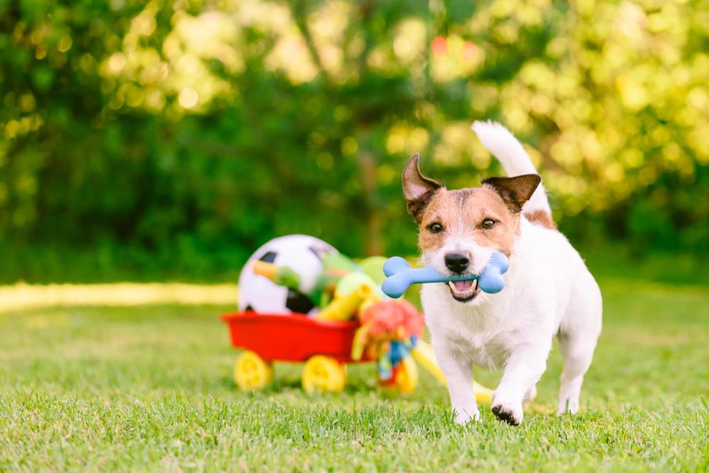dog-playing-toys