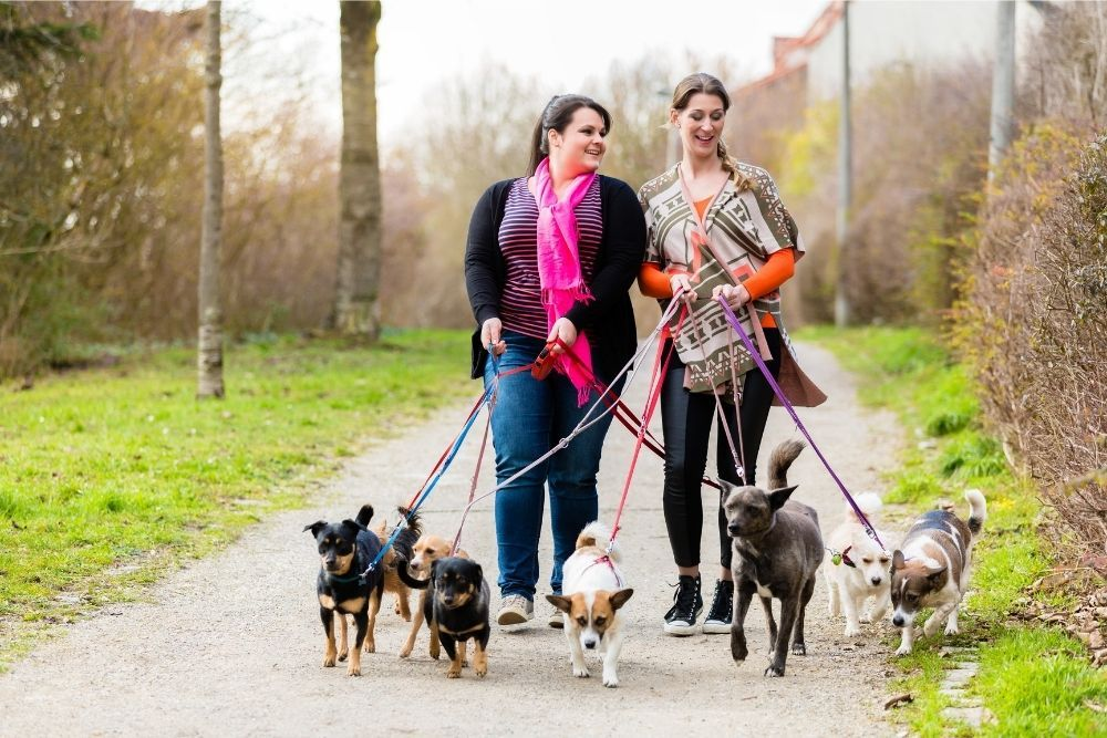 dog-sitters-walking-their-customers