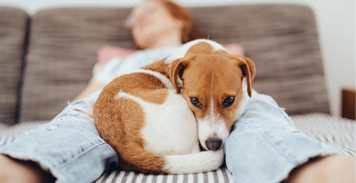 dog-sleeping-between-legs