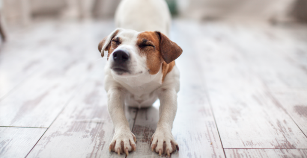 dog-stretching-header