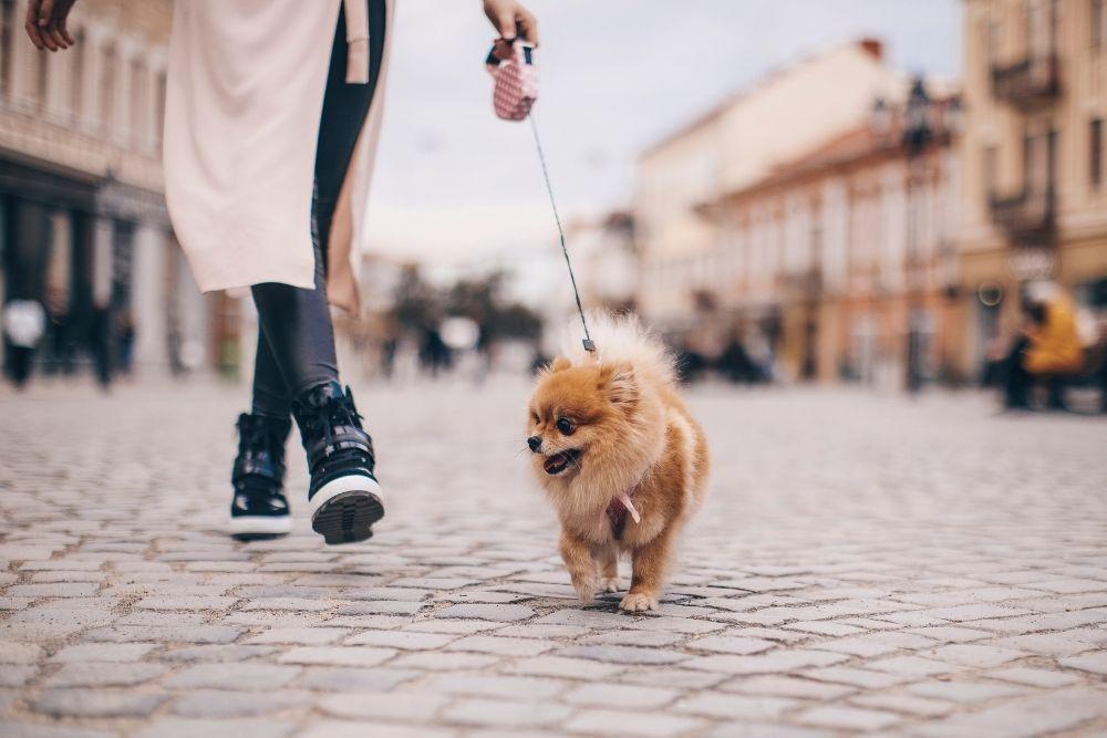 dog-walking-in-city