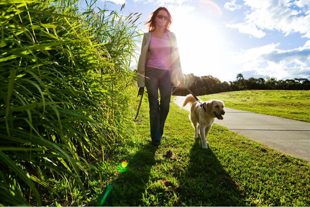 dog-walking-in-the-grass