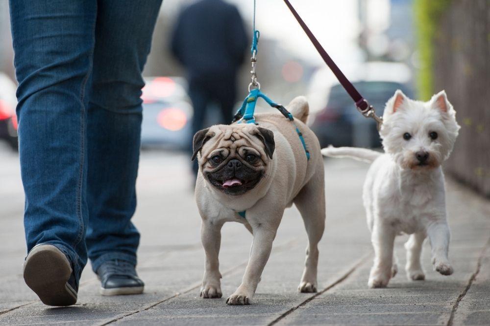 dog-walking-on-leash
