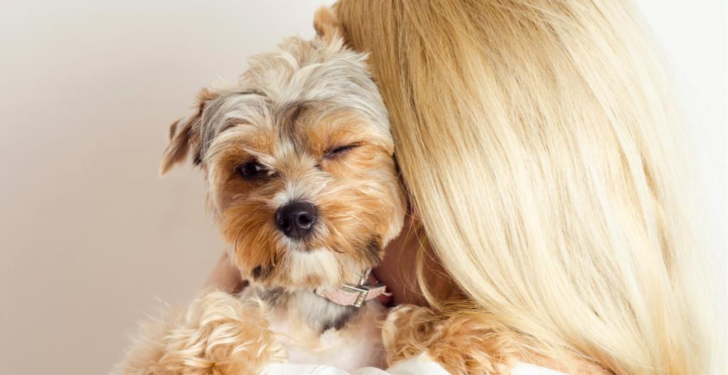dog-winking-header