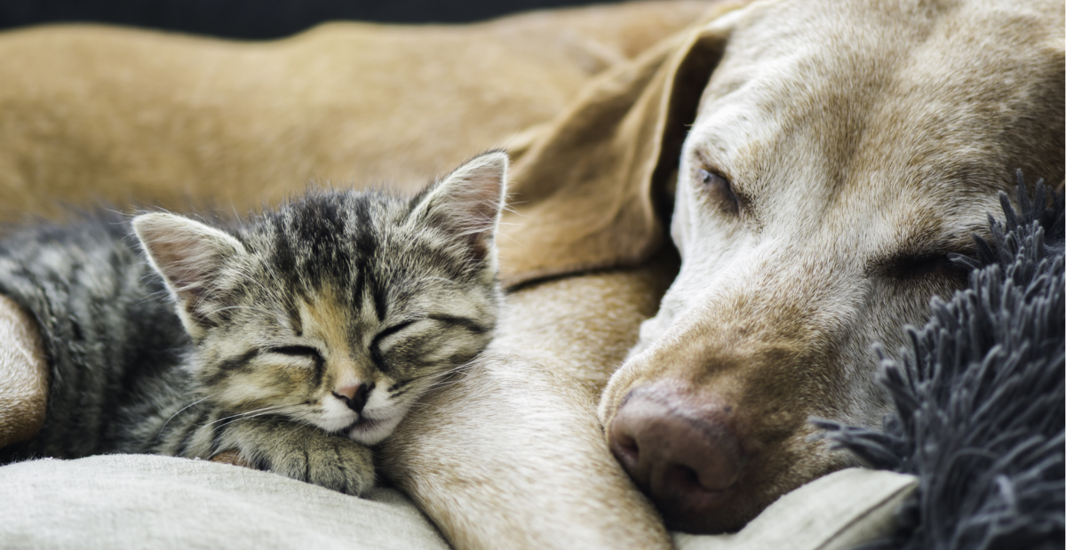 dogs-and-cats-header