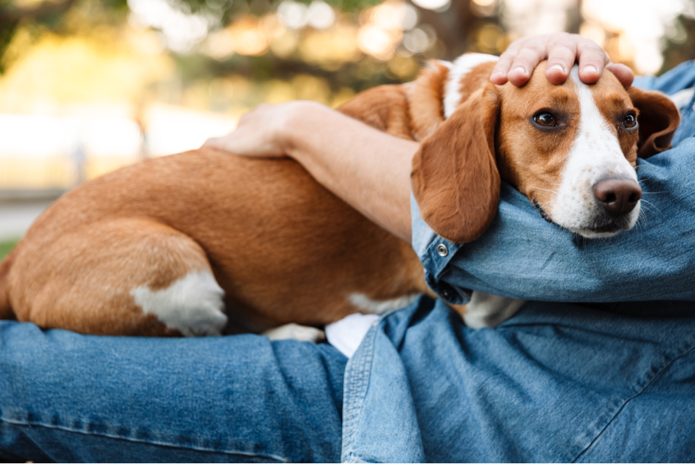 dogs-lay-on-owner's-top
