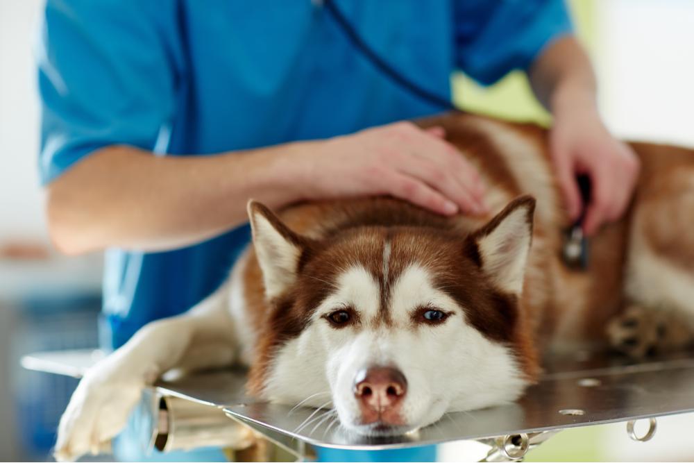 sick-dog-in-vet-clinic