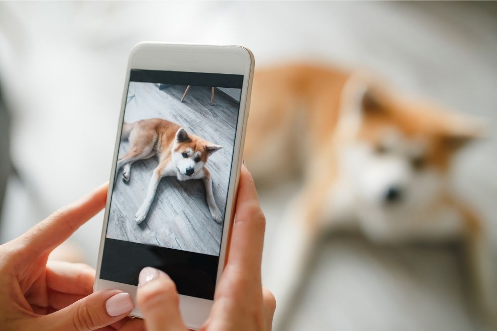 taking-pictures-of-dog