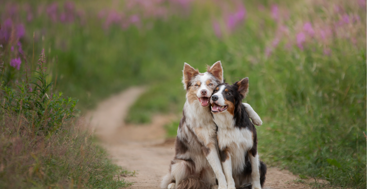 two-dogs-header