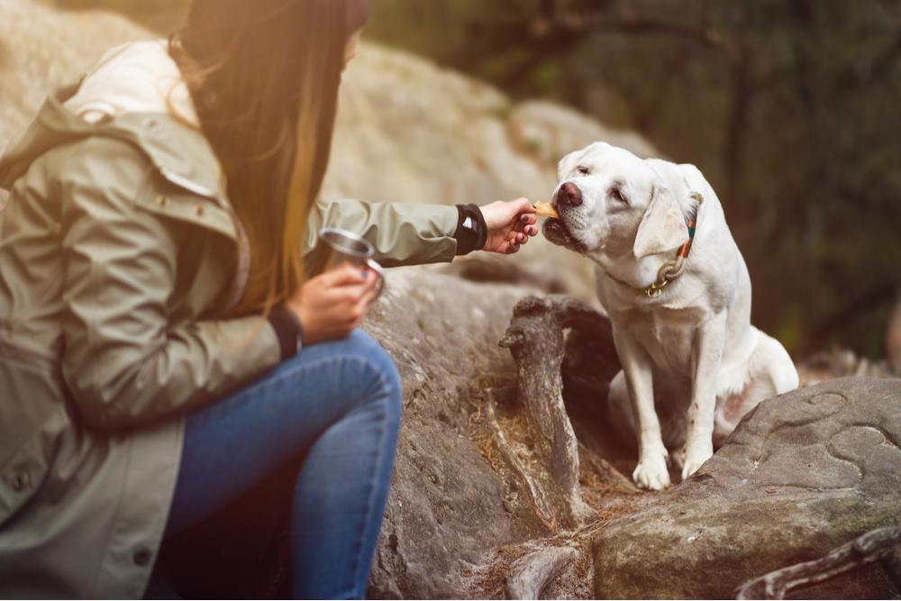 woman-feeding-the-dog