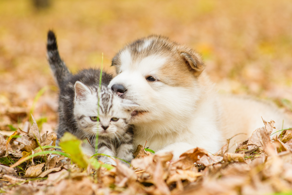 young-cat-and-dog