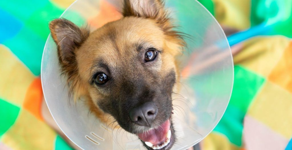 benefits-of-spaying-or-neutering-your-dog