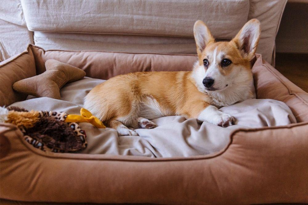 cozy-dog-bed