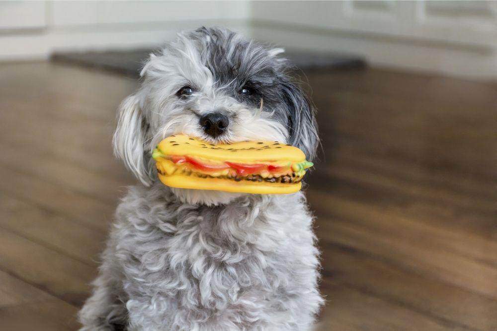 cute-dog-bringing-toy