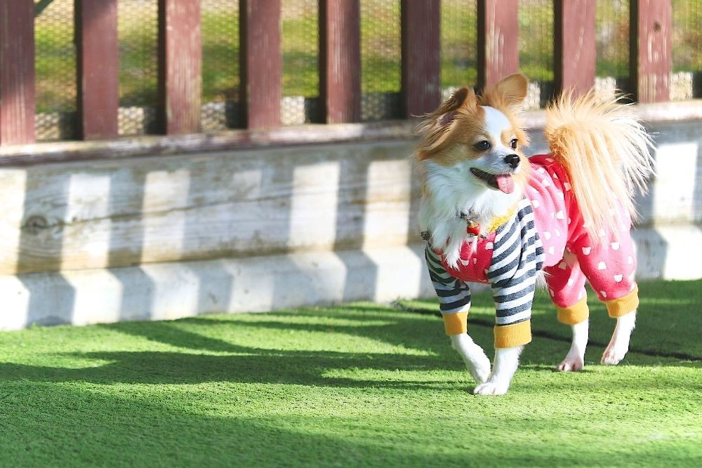 cute-dog-wearing-clothes