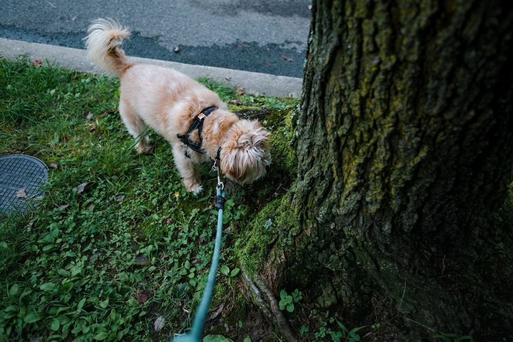 dog-on-leash-sniffing-tree