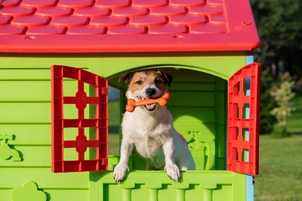 dog-playing-inside-dog-house
