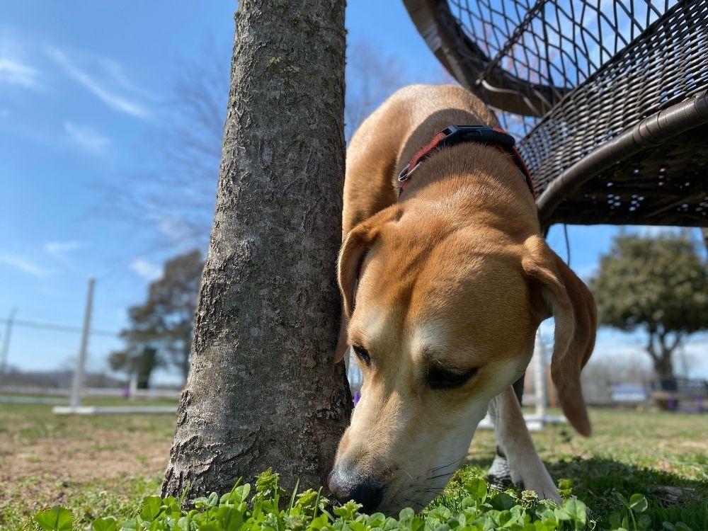 dog-sniffing-tree