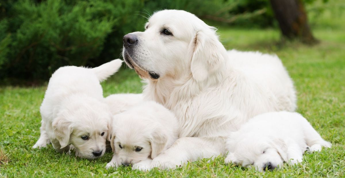 how-old-is-too-old-for-a-dog-to-have-puppies