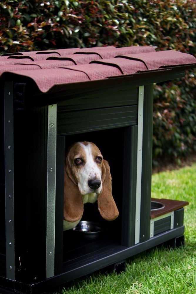 outdoor-dog-house