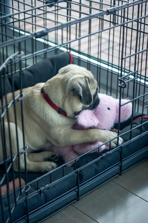 puppy-crate-training